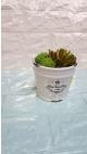 ghiveci ceramica cu cactusi 5/set